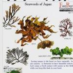 海苔を消化できるのは日本人だけ?